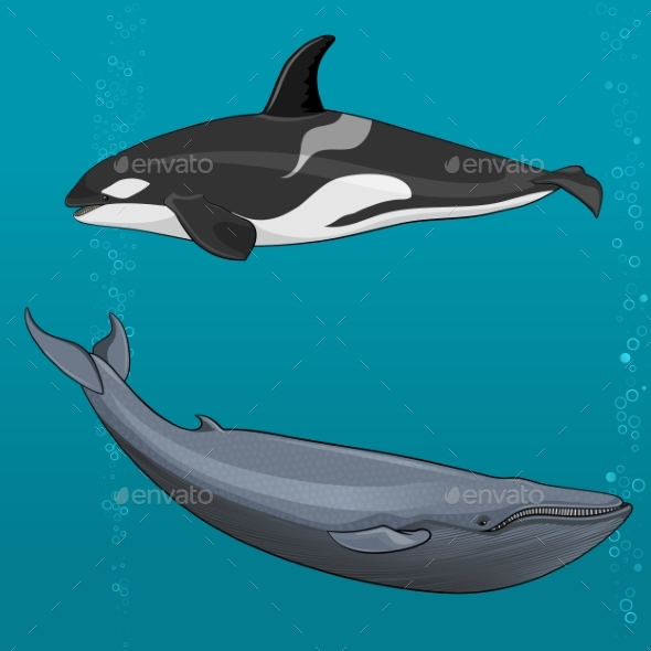 Illustration of Blue Whale and Killer Whale - Animals Characters