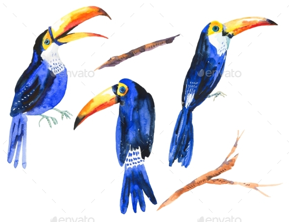 Watercolor Set of Tropical Birds Toucans - Animals Illustrations