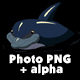 Navy Blue Dolphin in the Water - VideoHive Item for Sale