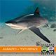 Tiger shark - 3DOcean Item for Sale