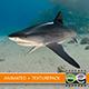 Tiger shark - 3DOcean Item for Sale