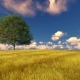 Green Tree on Field Windy Cloudy Sky Nulled