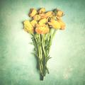Yellow ranunculus flowers - PhotoDune Item for Sale