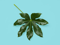 green leaf on blue background - PhotoDune Item for Sale