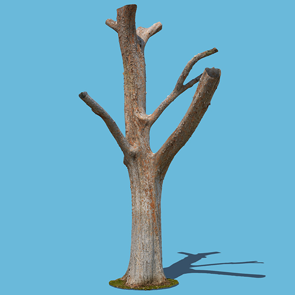 Woody the Woodpecker (3D Scan) - 3DOcean Item for Sale