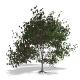 Tree - 00018 - 3DOcean Item for Sale