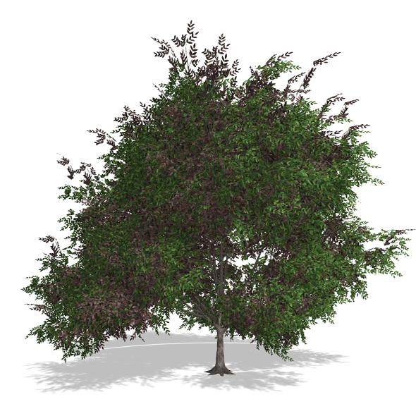 Tree - 00018 - 3DOcean Item for Sale
