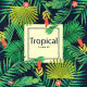 Summer Tropical House