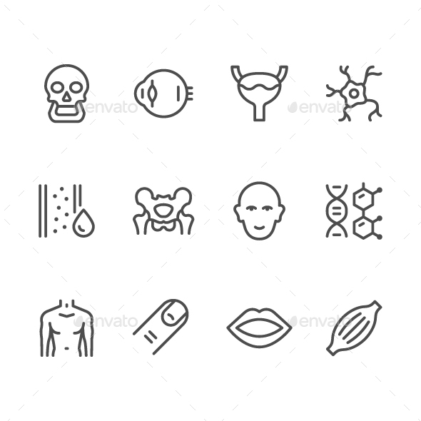 Set Line Icons of Human Organs - Abstract Icons