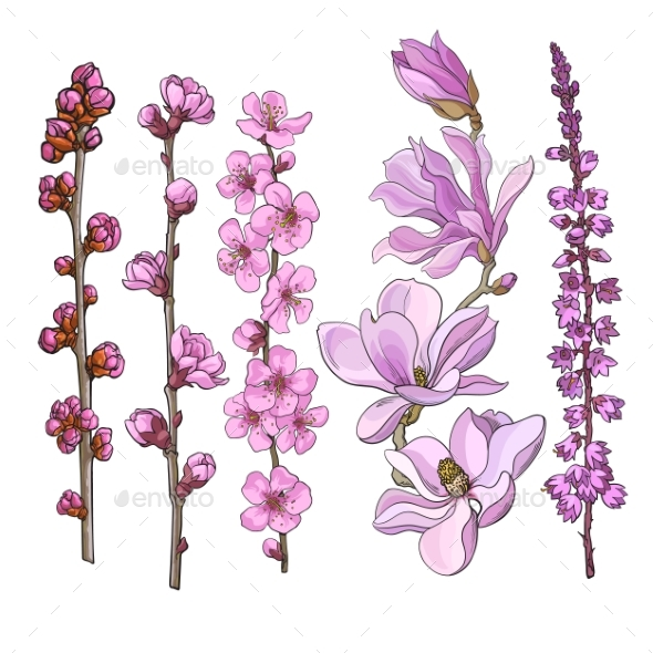 Hand Drawn Pink Flowers - Magnolia, Apple - Flowers & Plants Nature