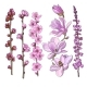 Hand Drawn Pink Flowers - Magnolia, Apple - GraphicRiver Item for Sale