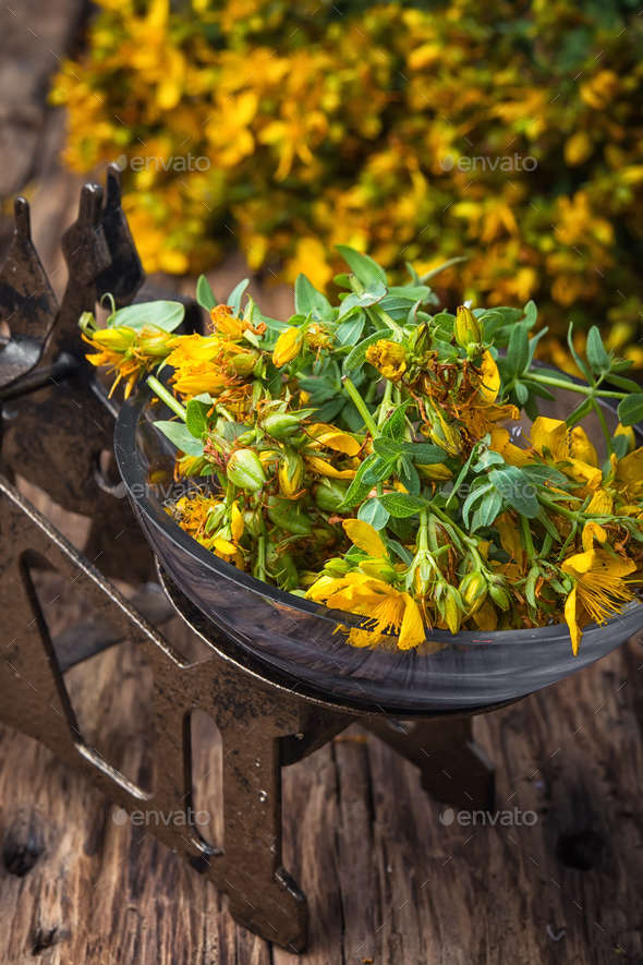 Hypericum flower.Herbal medicine. - Stock Photo - Images