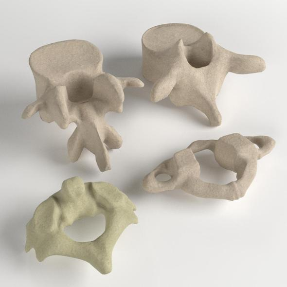 Human Vertebrae Set by FrancescoMilanese | 3DOcean