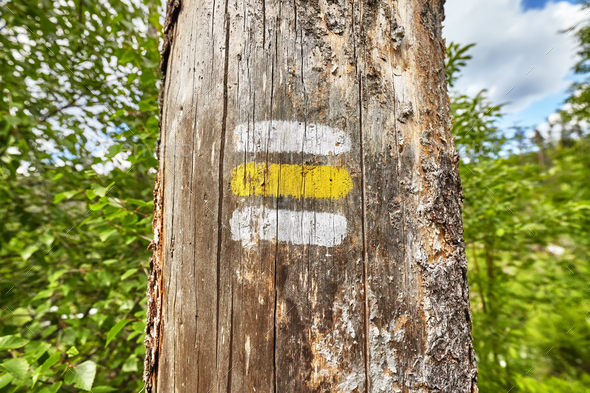 Close up of a hiking trail marking painted on tree. - Stock Photo - Images