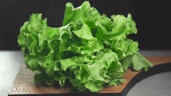 VideoHive Fresh Leaves of Green Salad Greens and Vegetables Vitamins in Healthy Food 20204359