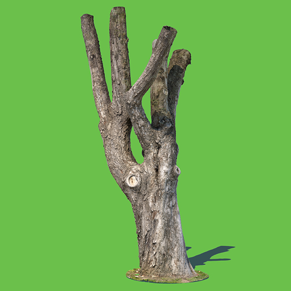 Charles Barkley (3D Scan) - 3DOcean Item for Sale