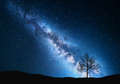 Milky Way and tree on the field