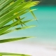 Palm Leaf Detail.  Footage of a Tropical Palm Tree Leaf in a Slight Breeze and Blurred Blue Ocea - VideoHive Item for Sale