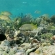 Many Kinds of Fish Floating on the Coral Reef - VideoHive Item for Sale