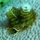 A Christmas Tree Worms on the Coral Are Hiding in Its Shelter - VideoHive Item for Sale