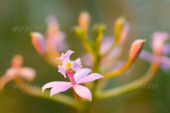 Orchid flower - Stock Photo - Images