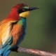 Colored Bird Looking in Different Directions - VideoHive Item for Sale