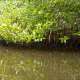 Floating Through Mangroves - VideoHive Item for Sale