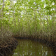 Floating In A Tunnel From Mangroves - VideoHive Item for Sale