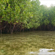 Floating Near Mangroves Shore - VideoHive Item for Sale