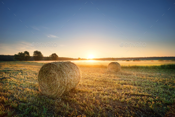 Round pressed bundles of hay on the field - Stock Photo - Images
