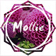 Mollie - Beautiful and Responsive WordPress Blog Theme Nulled