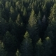 Aerial View of Spruce Forest in Montenegro - VideoHive Item for Sale