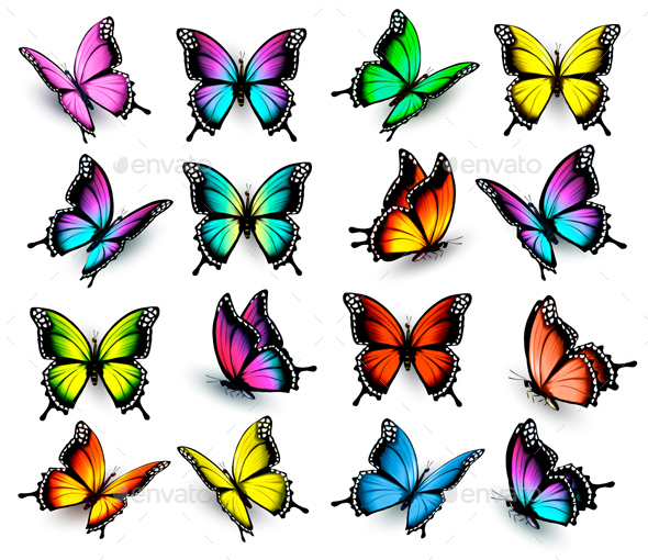 Colorful Butterflies Set. Vector. - Animals Characters