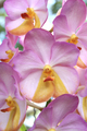 Close-up of Orchid - PhotoDune Item for Sale
