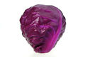 Red cabbage isolated on white - PhotoDune Item for Sale