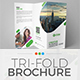 Tri-Fold Brochure Template 01 Nulled