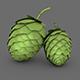 Hops - 3DOcean Item for Sale
