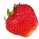 Ripe strawberry on a white background - PhotoDune Item for Sale