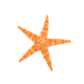Sea starfish on a white background - PhotoDune Item for Sale