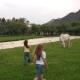 Children Run Across the Field. Two Little Girls Running Through a Meadow Where Grazing Horse