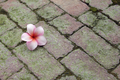 Plumeria flower on brick floor - PhotoDune Item for Sale