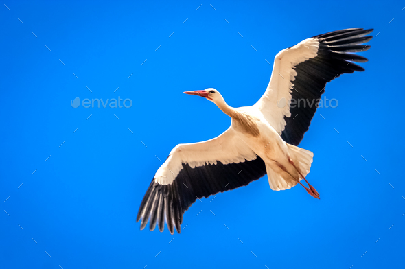 Stork in the sky - Stock Photo - Images