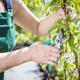 Women gardener cutting tree branch. - PhotoDune Item for Sale