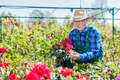 Senior gardener choosing a potted plant. - PhotoDune Item for Sale
