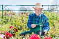 Senior gardener selecting a tree. - PhotoDune Item for Sale