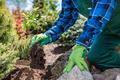 Gardener planting new tree in a garden. - PhotoDune Item for Sale