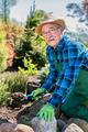 Senior gardener digging in a garden. - PhotoDune Item for Sale