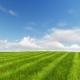 Green Field and Cloudy Sky 3D Render Nulled