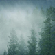 Mist Moving Through Wild Forest In Rainfall - VideoHive Item for Sale