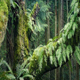 Moving Past Old Growth Tree In The Forest - VideoHive Item for Sale